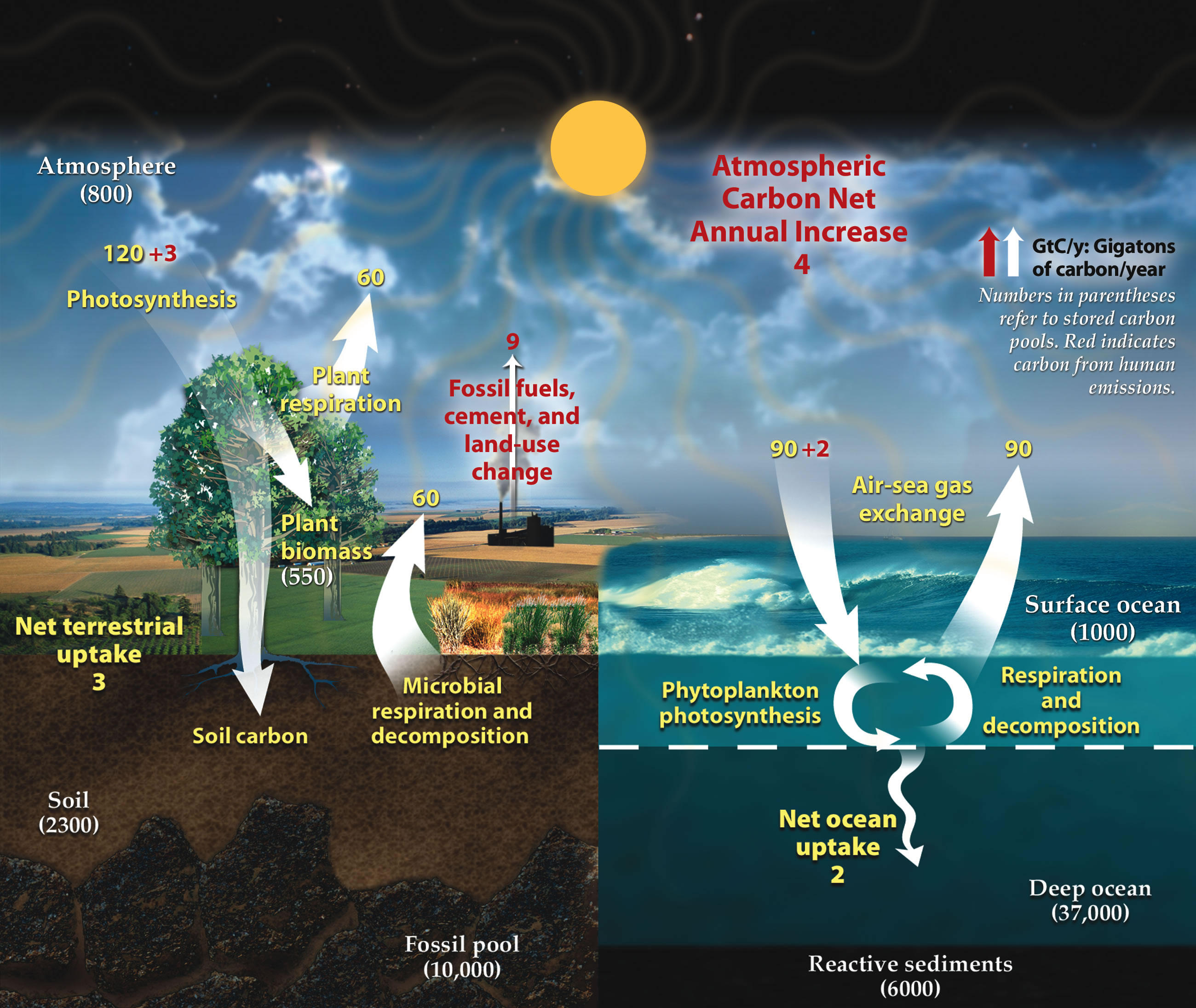 Polarpedia permafrost carbon cycle pooptronica Images
