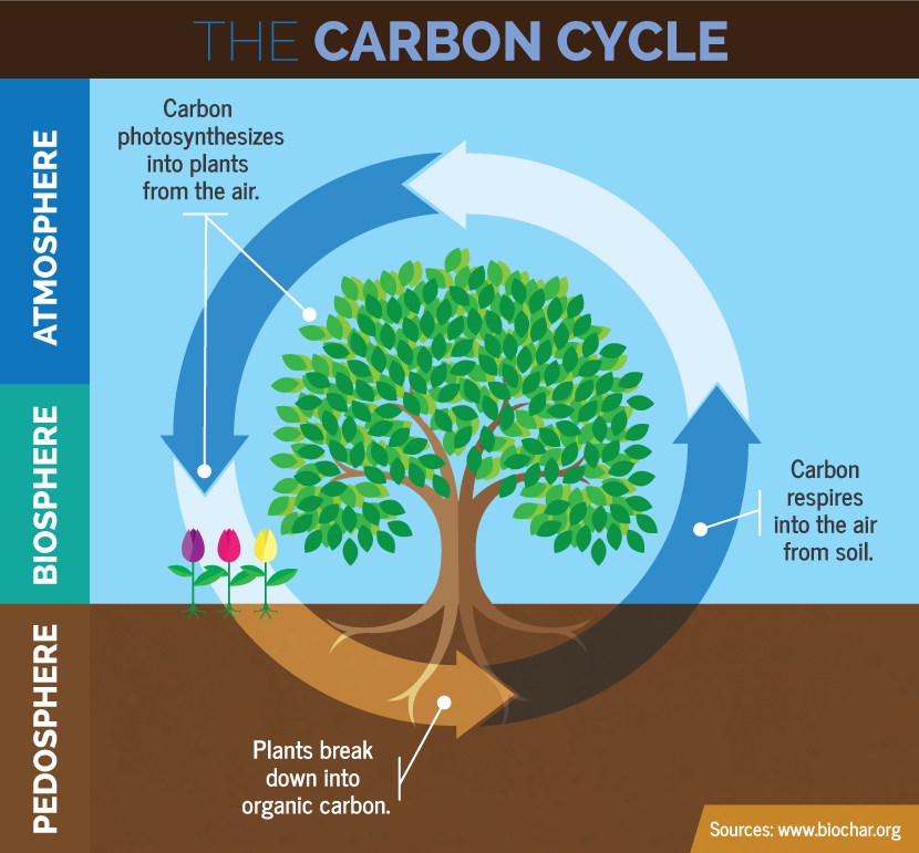 Polarpedia permafrost carbon cycle ccuart Choice Image